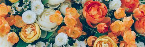 liguria fiori liguria fiori e foglie