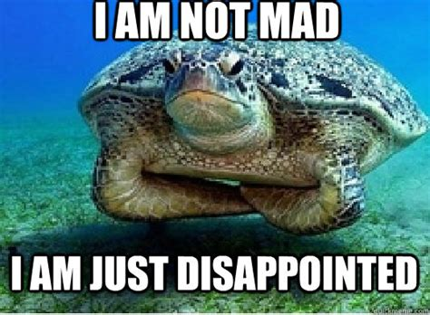 Disappointed Meme - turtle meme generator turtle is not angry just