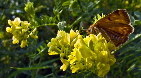 Schmetterling 3d 4780 by Schmetterling Auf Gelben Bl 252 Ten Bild Foto Uwe