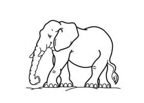 what color are elephants elephant coloring pages coloring pages