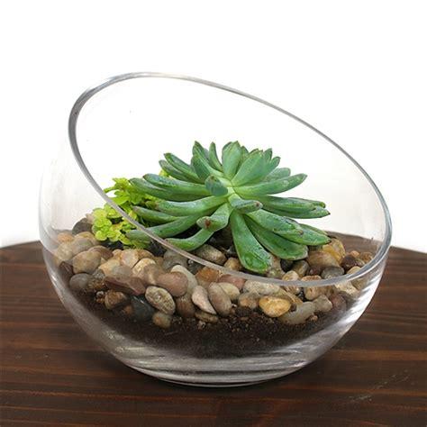 small bowl succulent terrarium kit