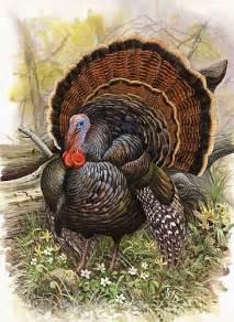 wild turkey for thanksgiving thanksgiving 171 digital storytelling
