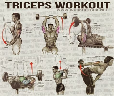 the best triceps exercises for mass fitness workouts