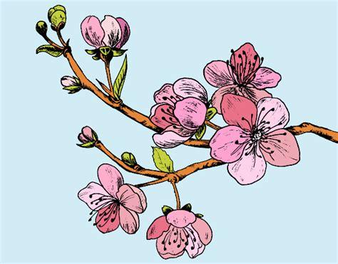 fiori di ciliegio disegno disegno ramo di ciliegio colorato da utente non registrato