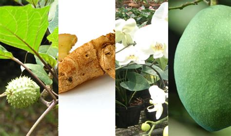 hortikultura detiktanicom