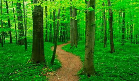 selling themes forest themes forest wallpapers