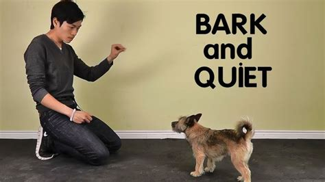 teach not to bark teach to stop barking treatpouch put it on cue