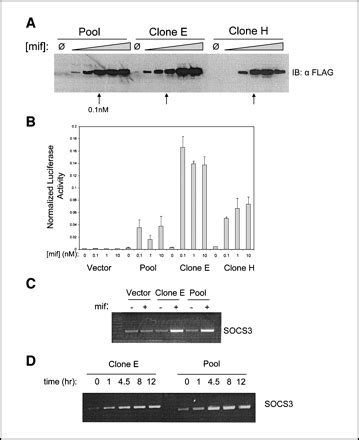 Midbass Genetic Cr 65 identification of a genetic signature of activated signal