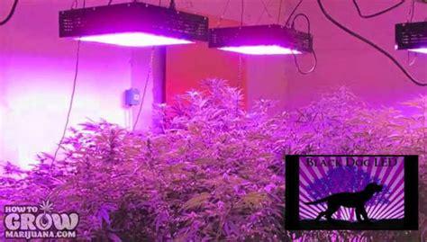 marijuana growing  tips     growing great