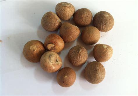 Buah Sawo Manila Muda Belum Matang 15 manfaat dan khasiat biji buah pinang muda untuk