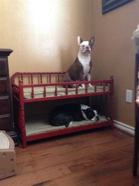 Bunk Bed For Dogs 25 Best Ideas About Bunk Beds On Rooms Puppy Cage And Beds