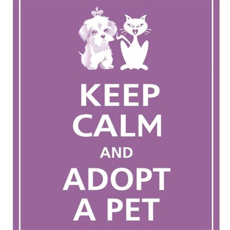 where can i adopt a puppy adopt a pet pet quotes