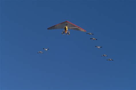apt documents whooping crane flyover for on line
