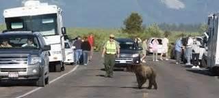 Yellowstone Brigade wildlife jams donahue