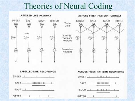 across fiber pattern theory definition psyc381exam4studyguide