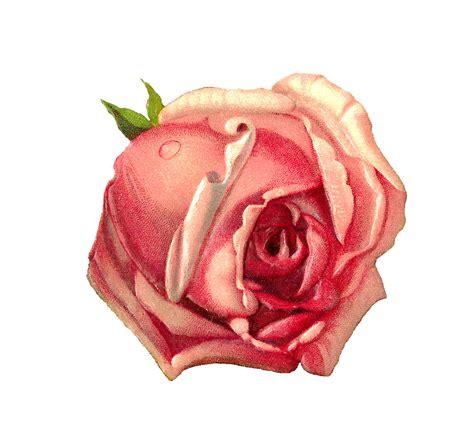 printable images of roses antique images free scrapbook digital paper pink rose