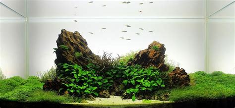 aquascape snail indonesia iwagumi google search aquascaping inspiration