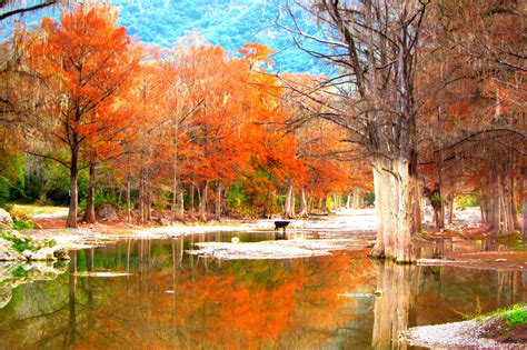 imagenes de otoño en japon oto 241 o en m 233 xico im 225 genes im 225 genes taringa
