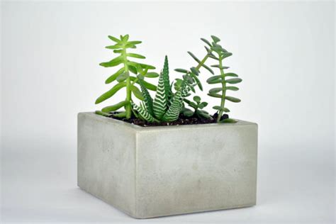 Rectangular Cement Planters by Small Rectangular Concrete Planter