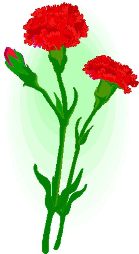 Oeillet Carnation
