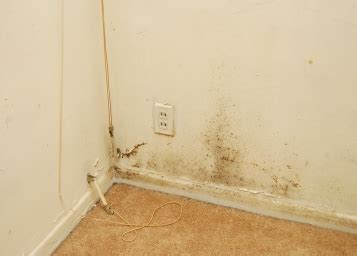 removing mold from concrete basement walls mold walls removing mold from walls