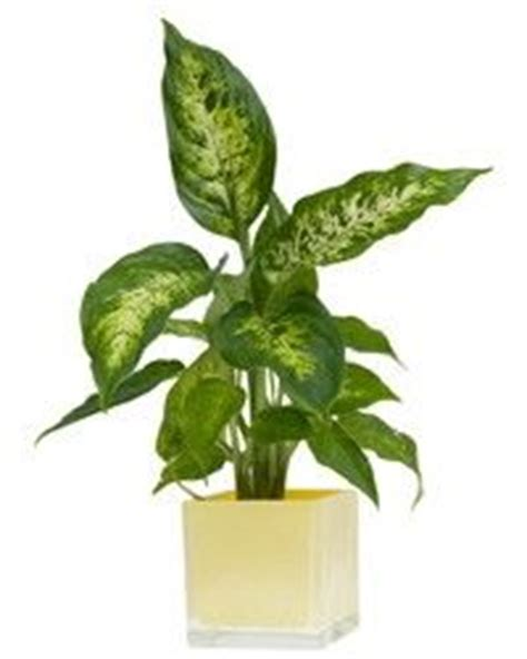 indoor plants that don t need sunlight indoor plants that don t need sunlight