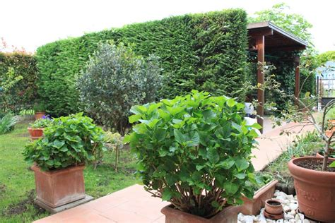 con giardino prato appartamento con giardino a prato pag 3 cambiocasa it