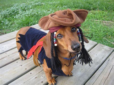 costume for dachshund dachshund costumes contest results crusoe dachshund