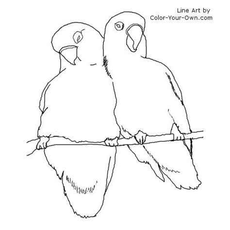 coloring pictures of lovebirds love birds coloring page