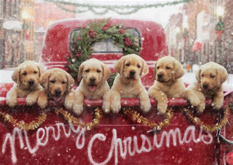 lab puppies  red truck dog christmas card  avanti press
