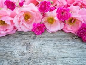 imagenes de rosas fondo fondos de pantalla rosas muchas rosa color flores
