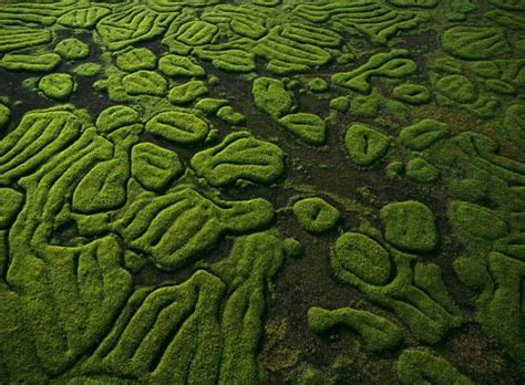 Patterns In Nature List | beautiful patterns in nature come with me to visit god s
