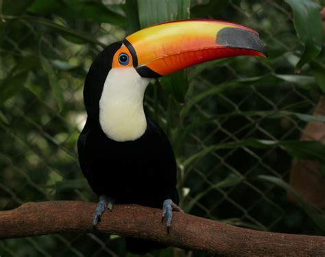 imagenes animales aves las aves mas hermosas del mundo en hd nuevas im 225 genes