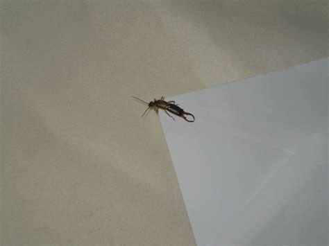 insetti nel materasso insetto