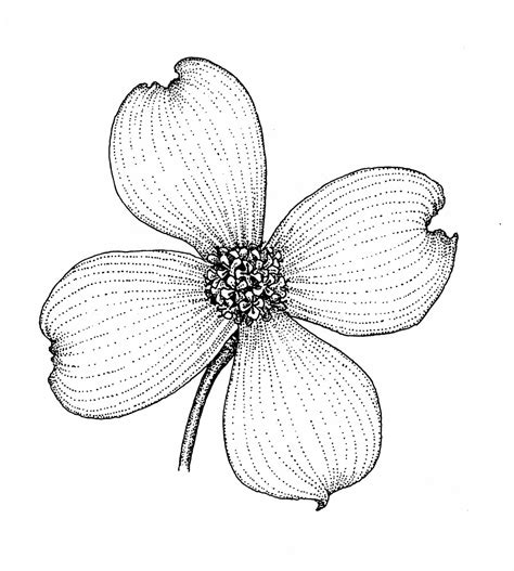 coloring page of dogwood flowers mountain of grace homeschooling our state scrapbook vriginia