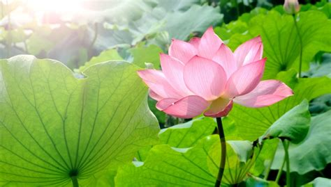 imagenes jpg de flores reise german china org cn westsee in hangzhou ein ort