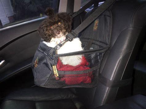 small car seat australia huxtable the poodle poodle parti poodle