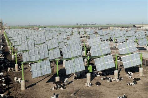 livestock and solar panels rangelands cattle feedlot solar field energy