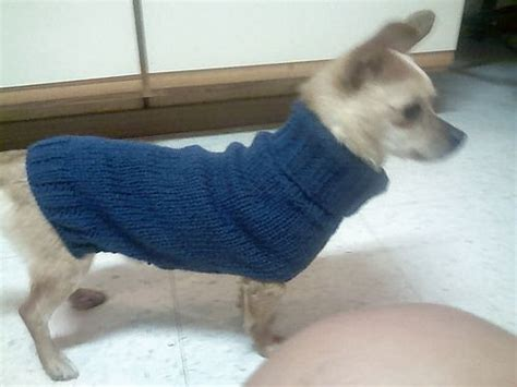 dog coat pattern for chihuahua 17 best images about chihuahua love on pinterest