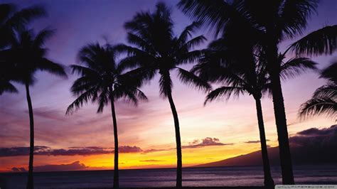 Good Christmas Trees Miami #1: Beach_sunset_with_palm_trees_wallpaper_free_desktop.jpg