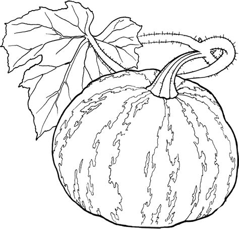 coloring pages for adults vegetables l 233 gumes coloriage 3 fruit vegetables pinterest kid