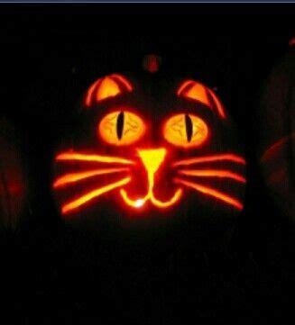 pumpkins cute cats  costumes  pinterest