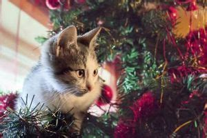 how to keep cats awsy from a christmas tree 25 unique tree ideas on tree traditional