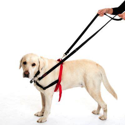 halti harness halti harness free p p 163 29