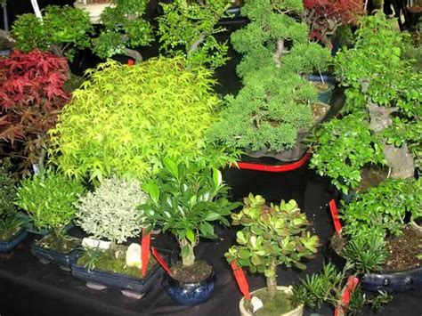 miniature plants for sale best plants for miniature gardens 28 images miniature