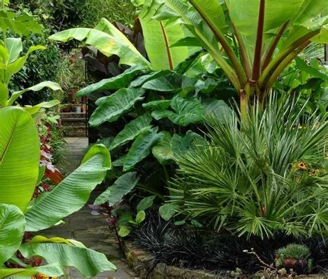 Tropical Trees For Backyard by 17 Best Images About Cool Climate Tropical Garden Ideas On