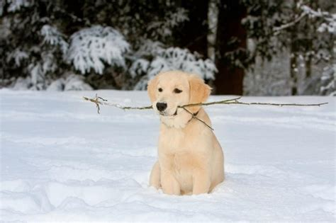 snow dogs names puppy names and meanings slideshow