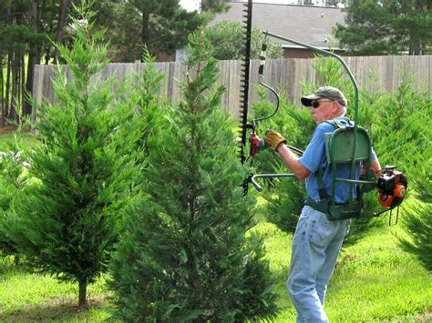 mississippi christmas tree farm buy trees early to get best options mississippi state extension service