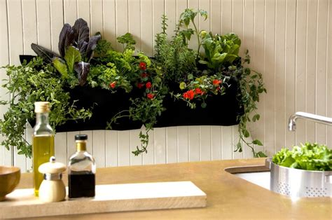 Indoor Herb Garden by Indoor Kitchen Herb Gardens Just In Time For