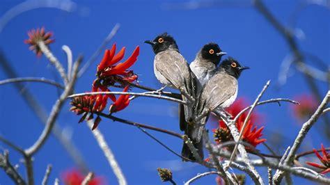 wallpaper hd 1920x1080 birds birds hd wallpaper 838815